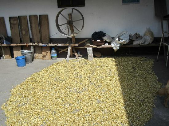 Tahuantinsuyo Weaving Workshop: corn drying in the courtyard of Miquel's home/workshop