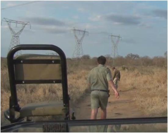 Kapama Buffalo Camp : Looking for tracks