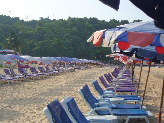 Nai Harn Beach : Rows of beach benches at Nai Harn.