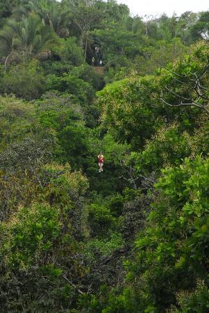 TiTi Canopy Tours: Pura Vida!
