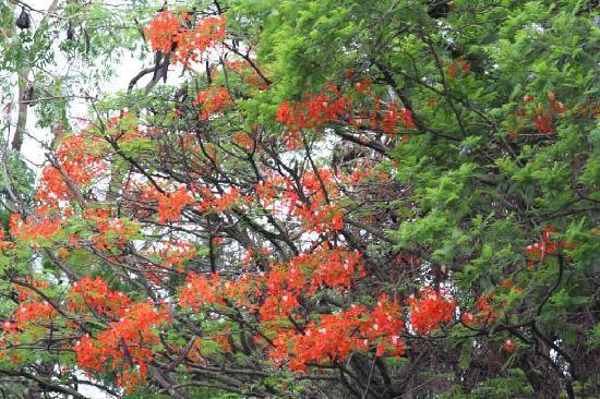 زامبيا: Tree & Bats - Zambia