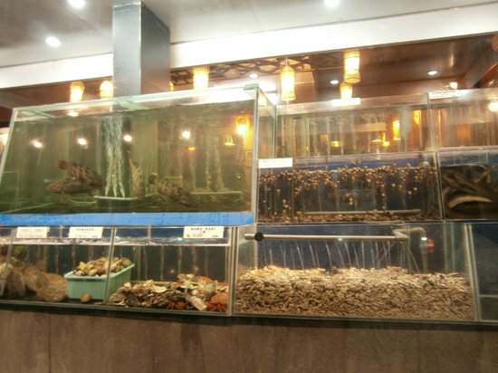 Take Japanese Restaurant: aquarium with fresh seafood