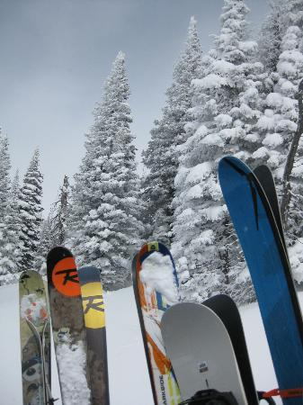 Grand Targhee Ski Resort: Skis n trees - on the way up the mountain on the snowcat.