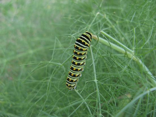 Mounts Botanical Garden: A butterfly on the way!
