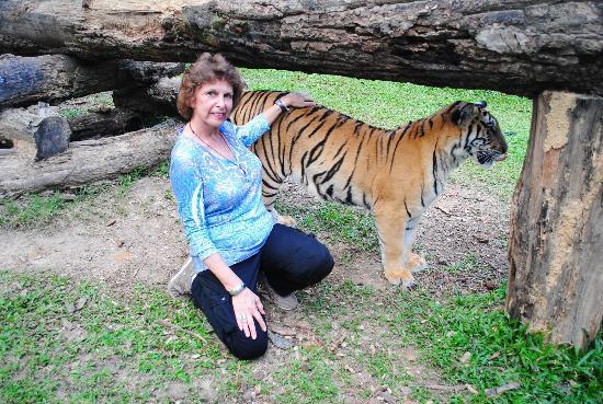 Tiger Kingdom: Running around playing