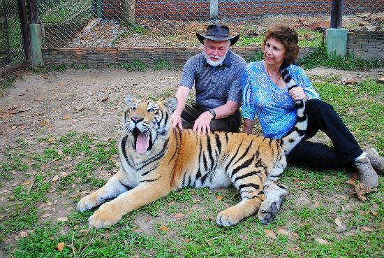 Tiger Kingdom: Amazing tigers