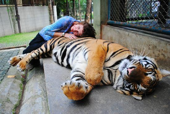 Tiger Kingdom: Ahhh, 2 year old napping