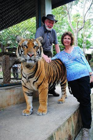 Tiger Kingdom: Happy buddies