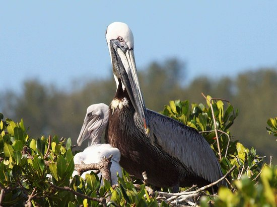 Sarasota Bay Explorers Top Tips Before You Go With Photos Updated 2017