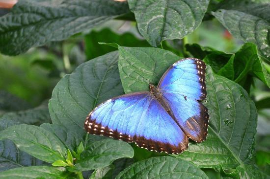 Les serres des papillons en libert jardin botanique mtl for Biodome insectarium jardin botanique
