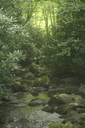 Cherokee Mountain Cabins: Beautiful hiking trail off Lake Nantahala