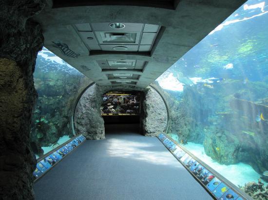 Aquarium Of The Pacific Tunnel Through A Tank