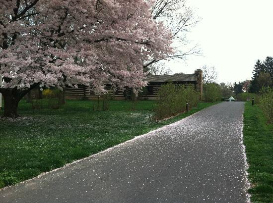 Wolf Trap National Park for the Performing Arts: Early Spring Blossom @ Wolf Trap