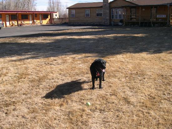Long Holiday Motel: Dogs grassy play area