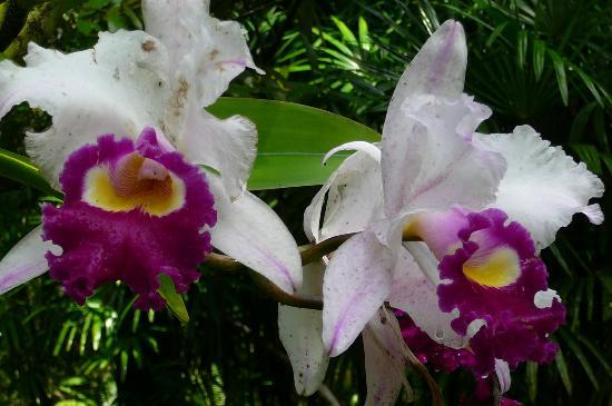 Art and Orchids: orchids in bloom