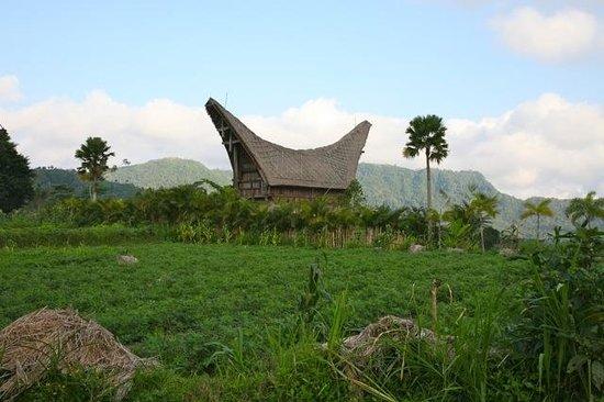 Surya Shanti Villa: Sidemen village