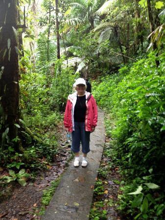 The Mine Trail (La Mina): La Mina Trail Walkway