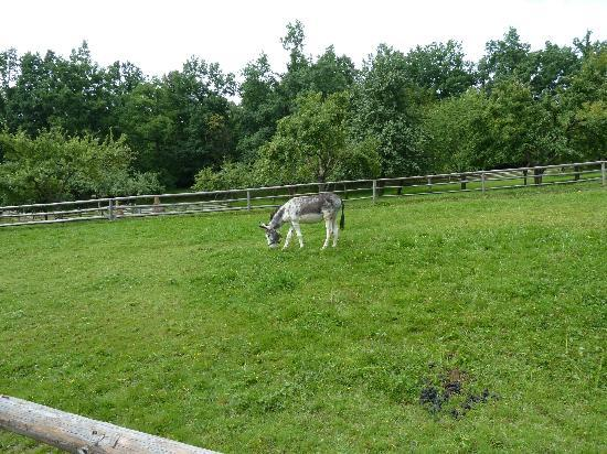 Wallachian Open Air Museum: Some domestic animal in village