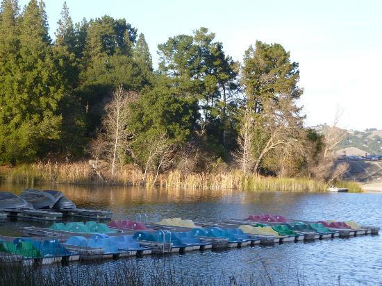 Lafayette Reservoir: water's edge