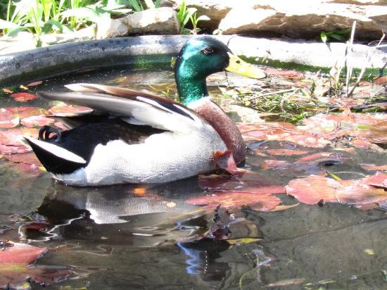 Smithsonian Institution Building: In The Butterfly Garden Pond