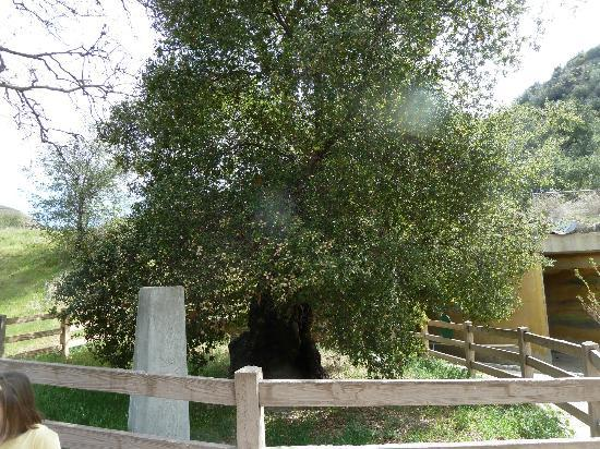 Placerita Canyon Nature Center: The Oak of the Golden Dream