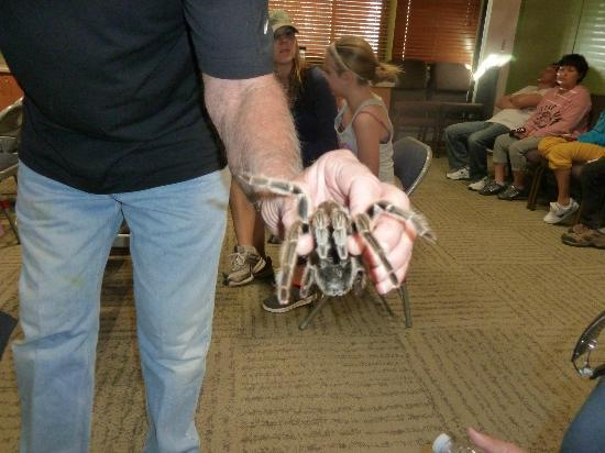 Placerita Canyon Nature Center: Rosie the Tarantula is a star attraction of the Animal Shows