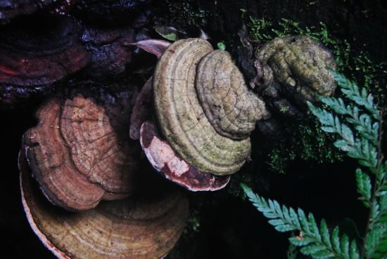 Lamington National Park: Fungi besdie the trail