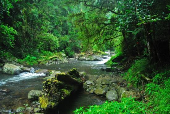 Lamington National Park: Canungra Creek