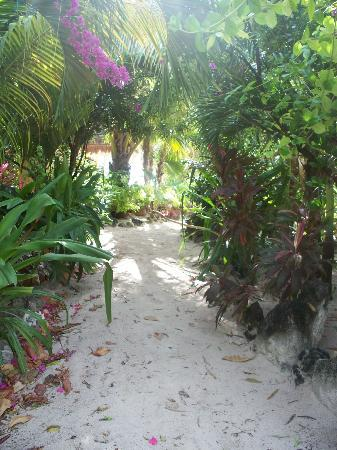 Mayan Beach Garden: A foot path to our suite.