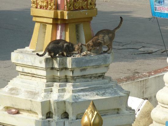 Queen's Garden Resort at River View: Happy cats getting fed, the Wat across from Queen's Garden.