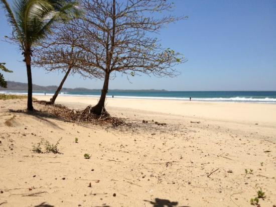 Sol y Luna Lodge: Playa Grande- 5 to 10 min walk