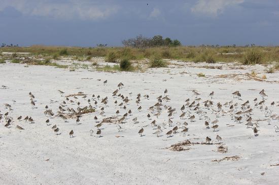 Caladesi Island State Park: Birdwatching