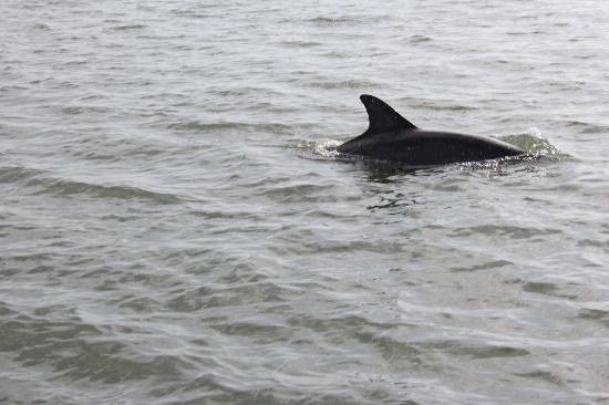 Caladesi Island State Park: Dolphin encounter on the Caladesi Ferry
