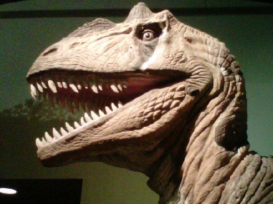 Cincinnati Museum Center : Careful!  Adventure lurks at every step...