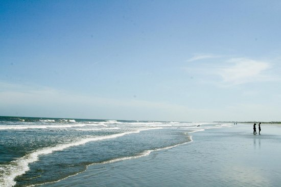See The Dolphins Strand Feed Review Of Kiawah Beachwalker Park
