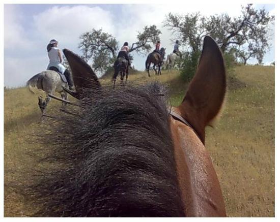Europe Equitation: Paseos por el campo andaluz