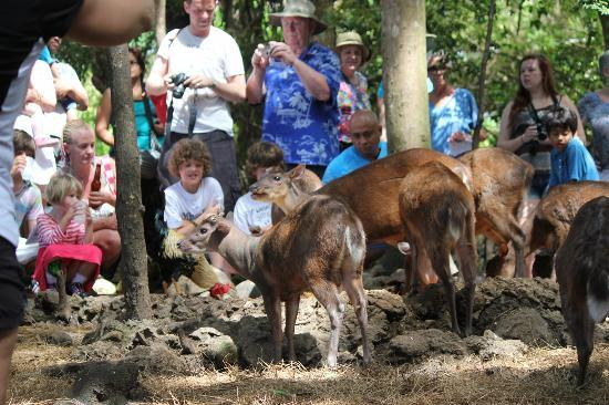 Barbados Wildlife Reserve: People and animals together without barriers.