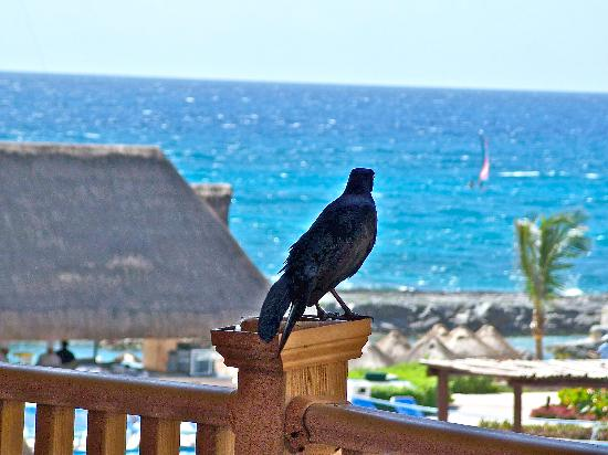 Heaven at the Hard Rock Hotel Riviera Maya: vistas del hotel