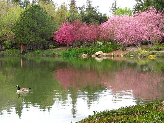 Shinzen Japanese Garden Fresno Ca Top Tips Before You