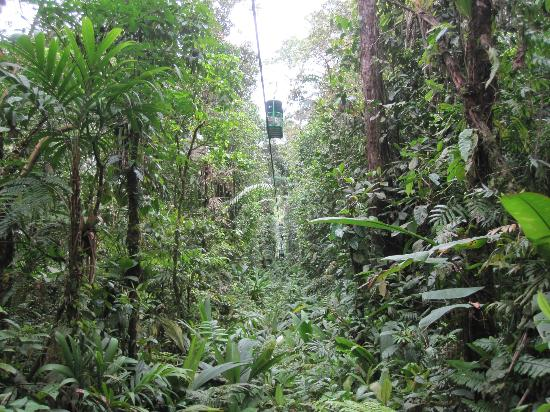Rainforest Adventures : Bosque lluvial Aerial Tram