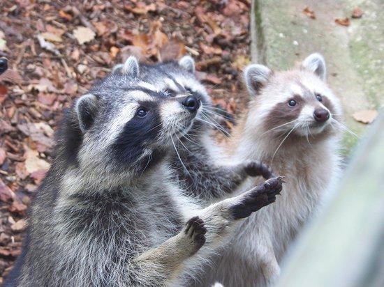 Parc Zoologique de Pescheray: Mignon tout plein