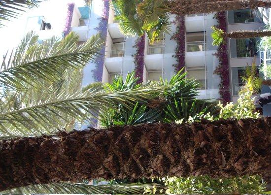Hotel Oasis plaza, desde la plaza