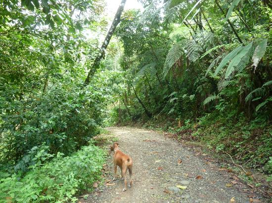Las Terrazas de Ballena: The jungle walks are lush and quiet and humid.