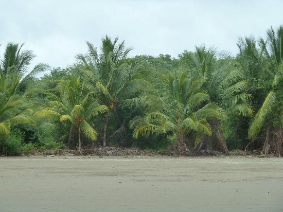 Las Terrazas de Ballena: Uvita beach