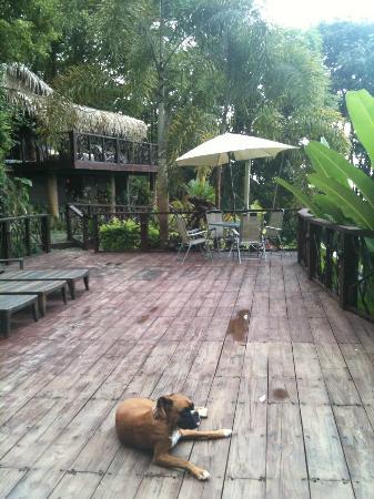 Las Terrazas de Ballena : The pool deck