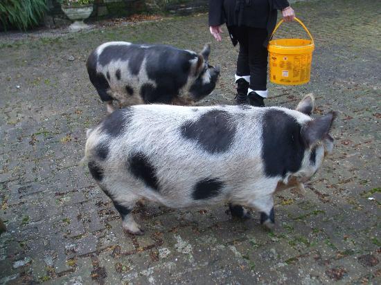Crooked Inn: The Piggies