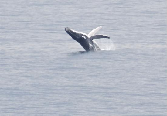 Blue Lake National Park: Whale season, 'Point Lookout' Stradbroke a great place to watch the migration