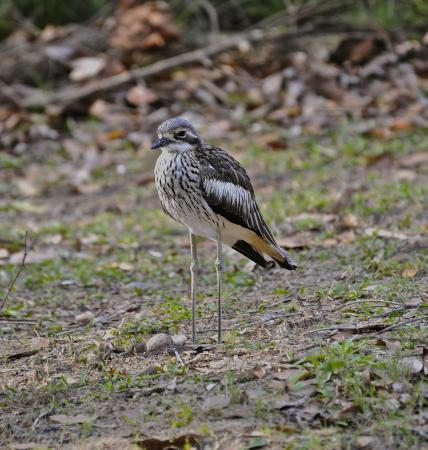 Blue Lake National Park: Curlew, these birds lay their eggs on the ground,