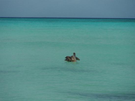 Posada Movida: mare con pellicano