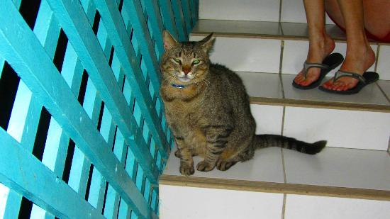 Hotel Mont Vernon: One of the cats in the complex